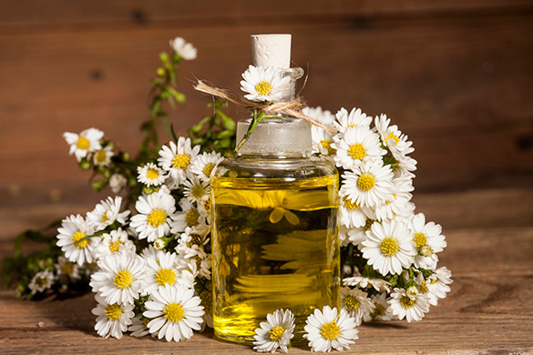 chamomile essential oil and flowers