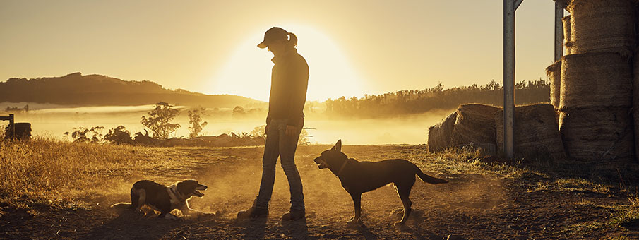 farmer with dogs in sunset